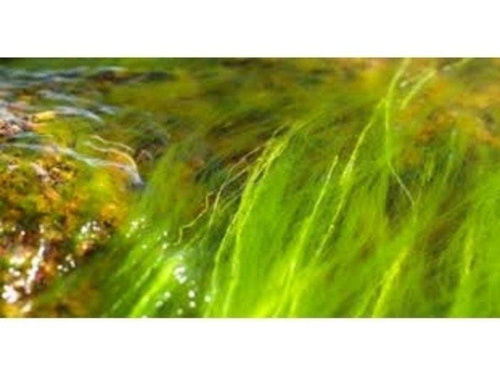 Cyanobacteria Blooms Found At Pond In Southampton