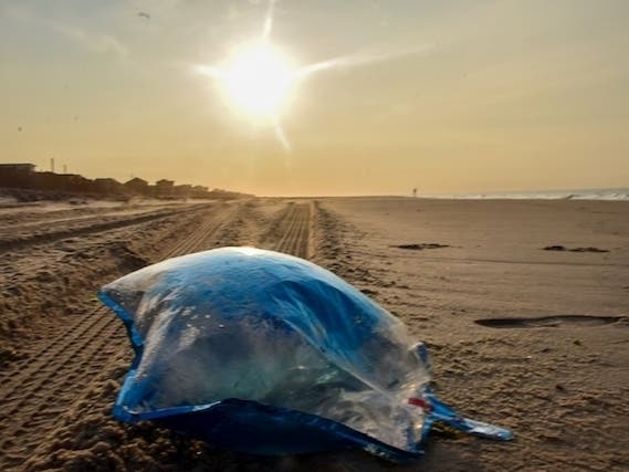 Proposed Balloon Ban In Southampton: Residents Asked To Take Poll