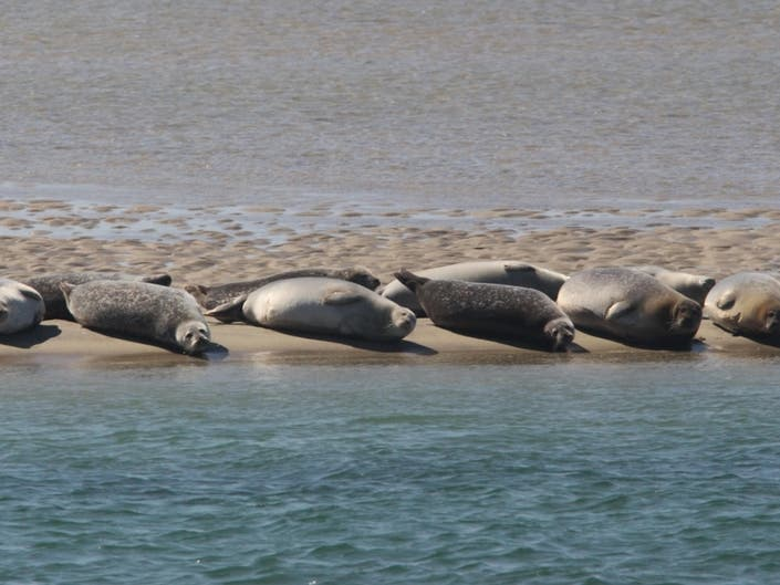 Seal Watching Cruises Kick Off In Southampton