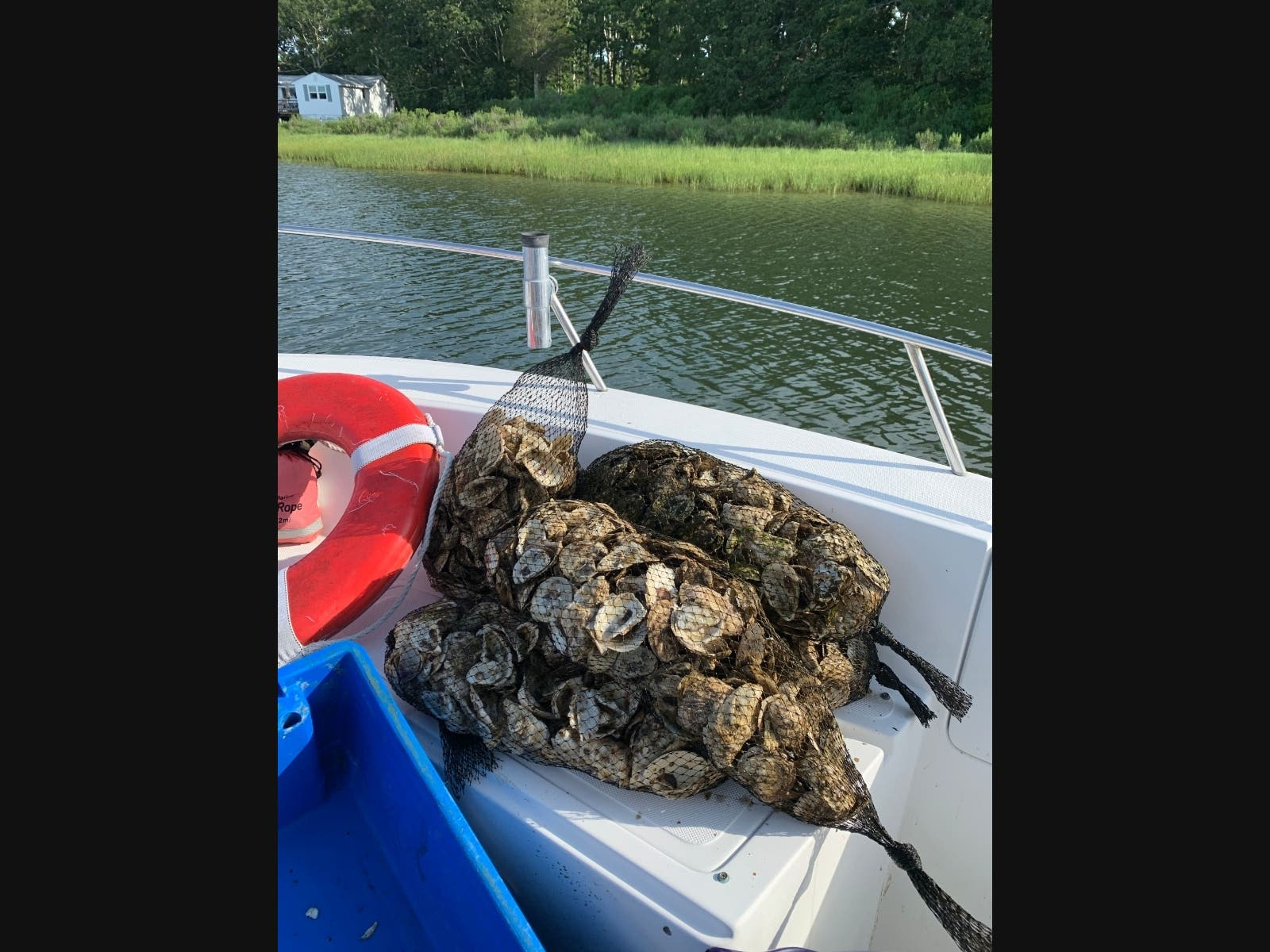 New Oyster Reef Launched In Montauk