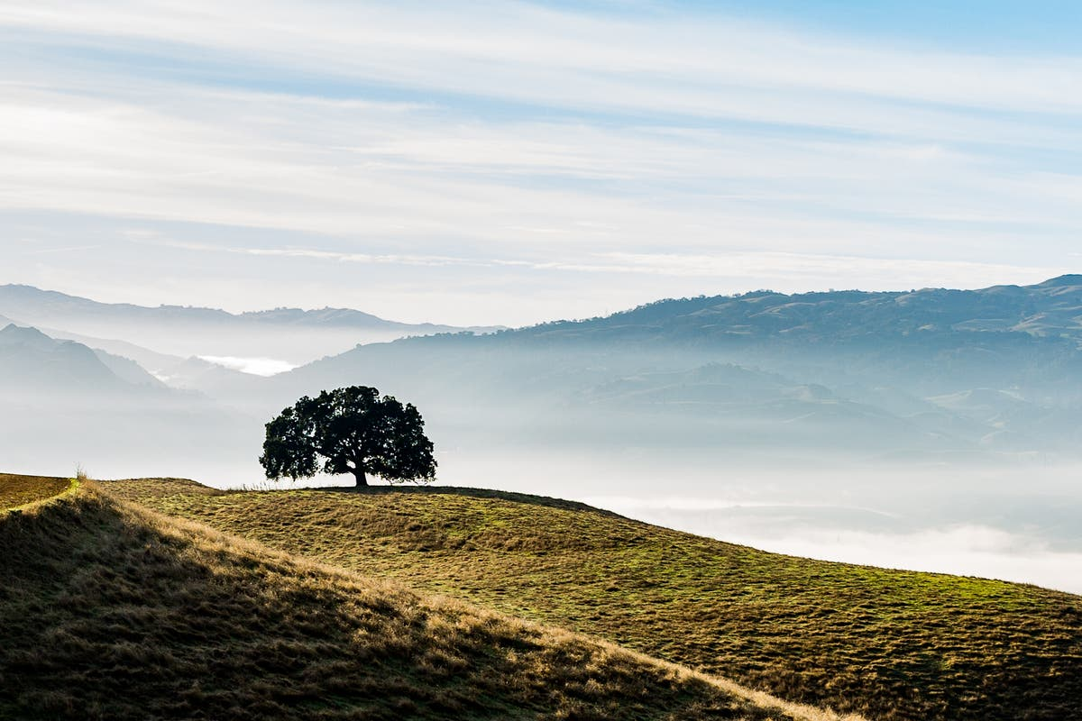 Lone Tree Atop Pleasanton Ridge: Photo Of The Week
