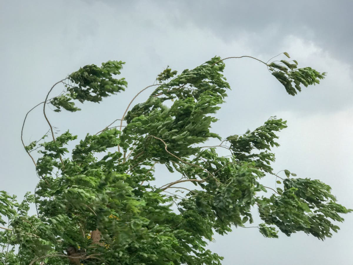 Wind Prompts Traffic Advisory On I-580, Altamont Pass: CHP