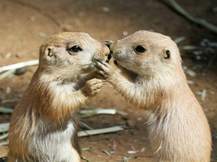 Cute Prairie Dogs Need Names; Sally Ride Honored: Saturday Smiles