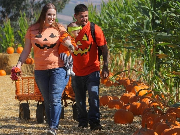 Pumpkin Farmer Wins $15K | Halloween Weddings: Saturday Smiles