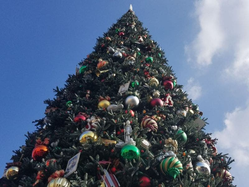 Christmas Tree In The Desert.Recycle Your Christmas Tree In Palm Desert Help Rivco Fish