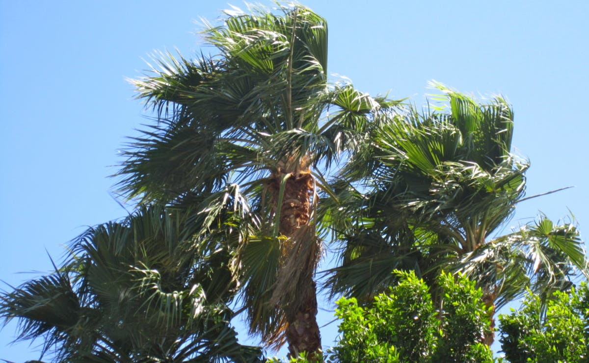 Strong Winds, Excessive Heat Combine To Create Dangerous