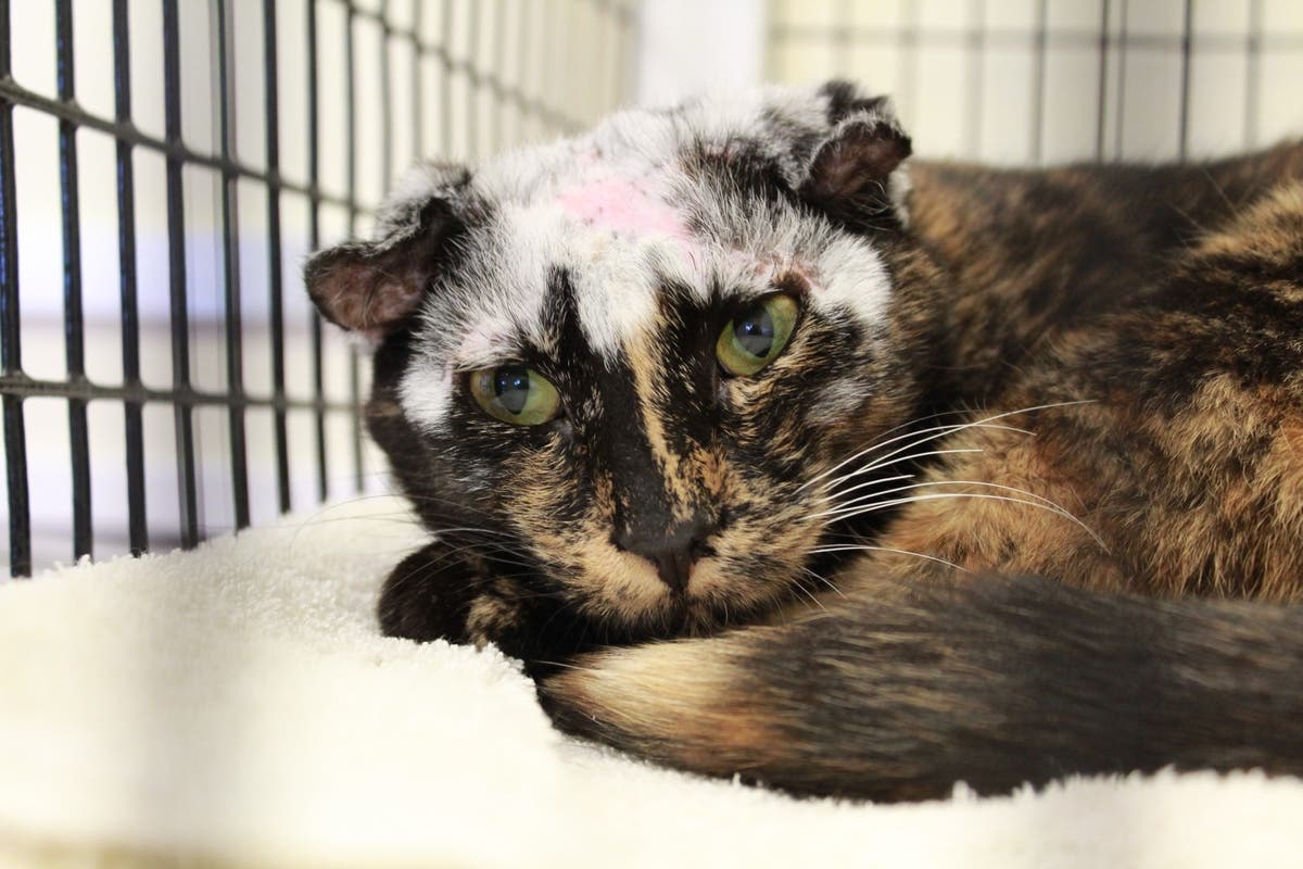 Disfigured Cat Who Suffered Severe Case Of Mange Needs