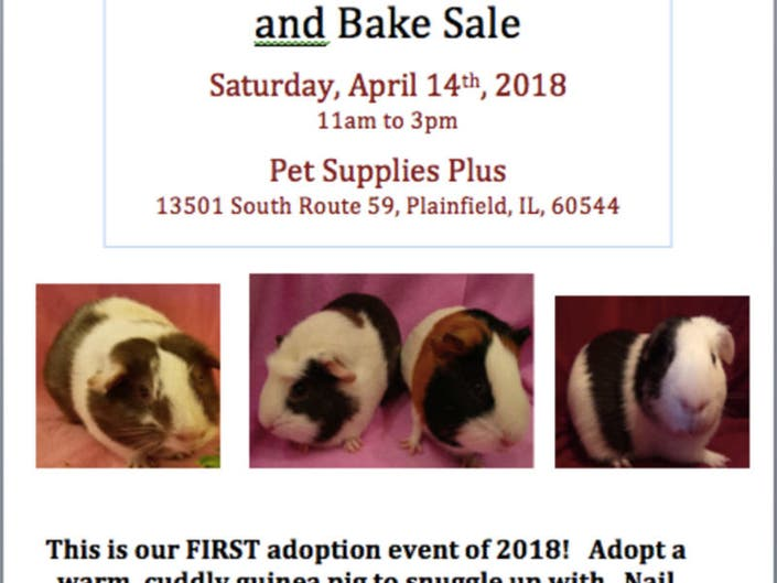 FIRST Adoption Event of 2018!!! | Plainfield, IL Patch