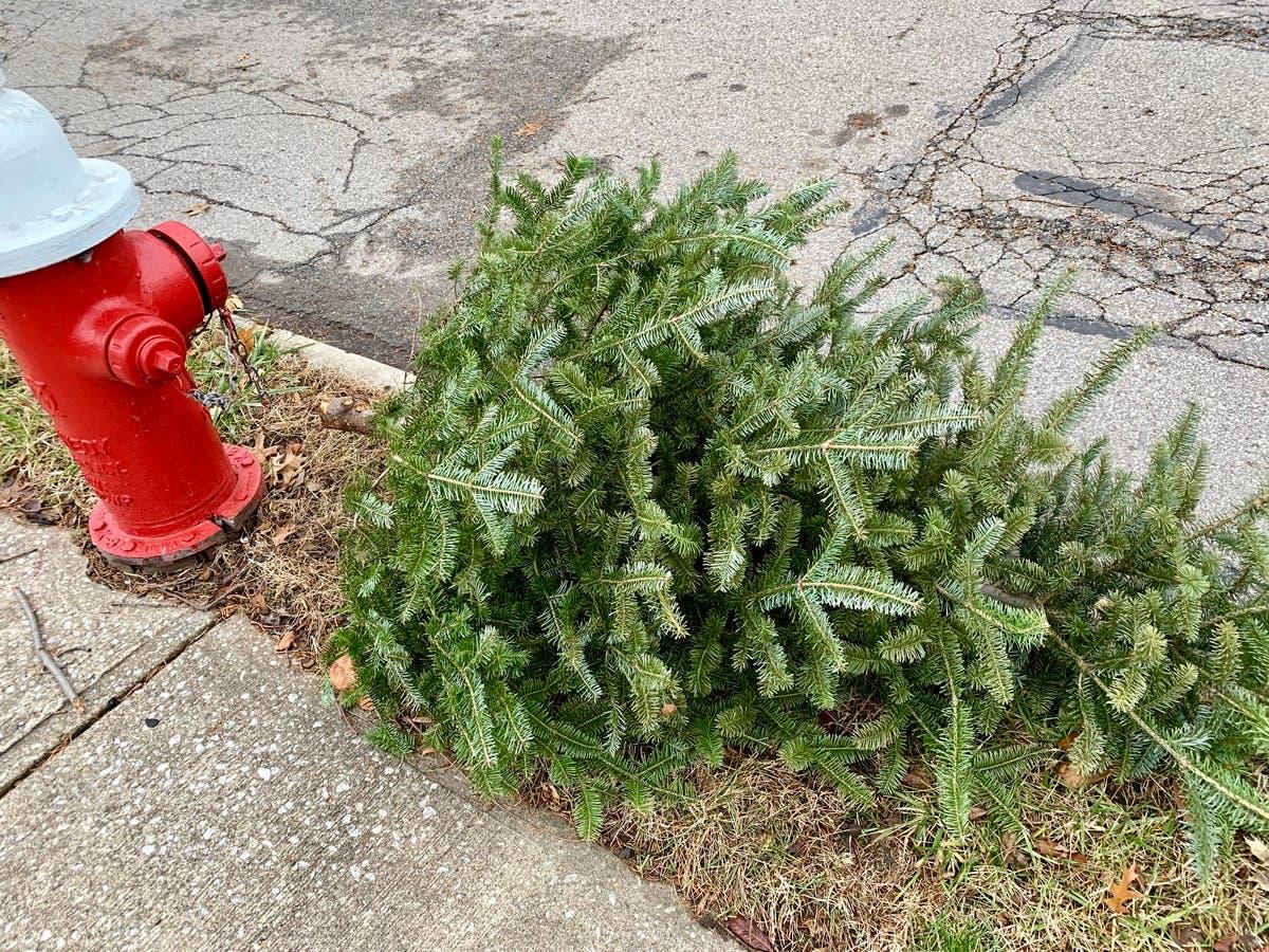 Christmas Tree Pick Up.City Of Lakewood Christmas Tree Pick Up Lakewood Oh Patch