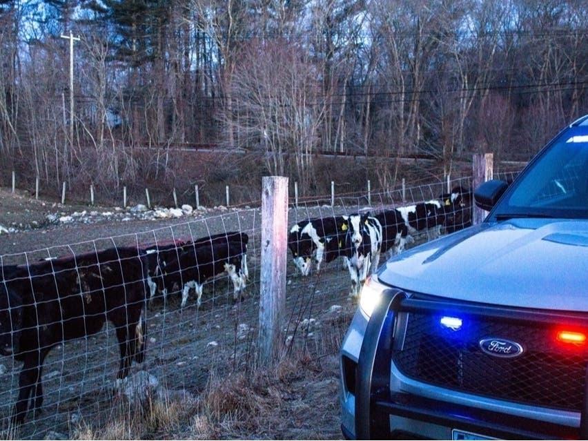 Troopers: 'Let's Keep It Moo-ving Guys'