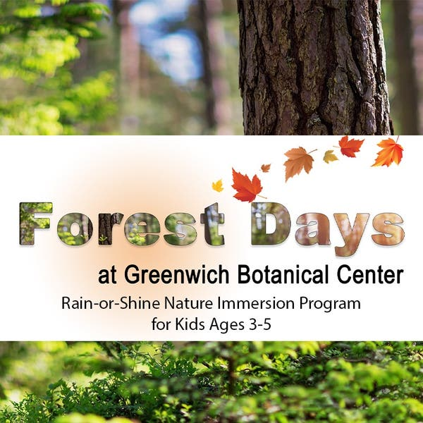 Sep 17 Forest Days Fall Session Greenwich Ct Patch