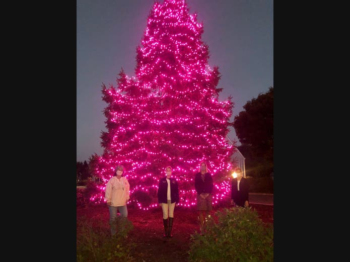 Port Jefferson Christmas Tree Lighting 2020 Lighting of the Pink Tree for Hope at Heritage Park   Miller Place
