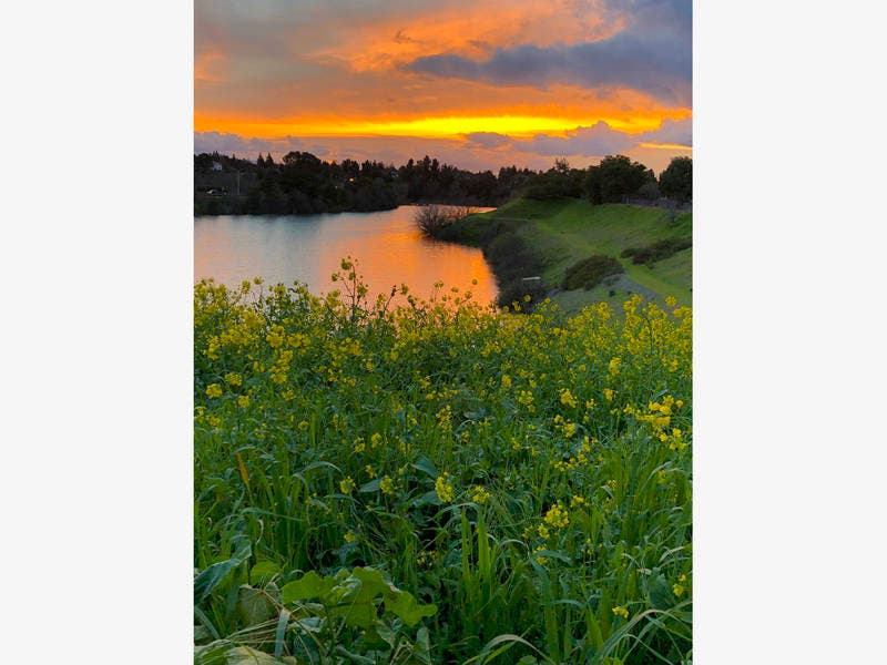 Sunset Over Wildflower Rimmed Creek: Photo Of The Day