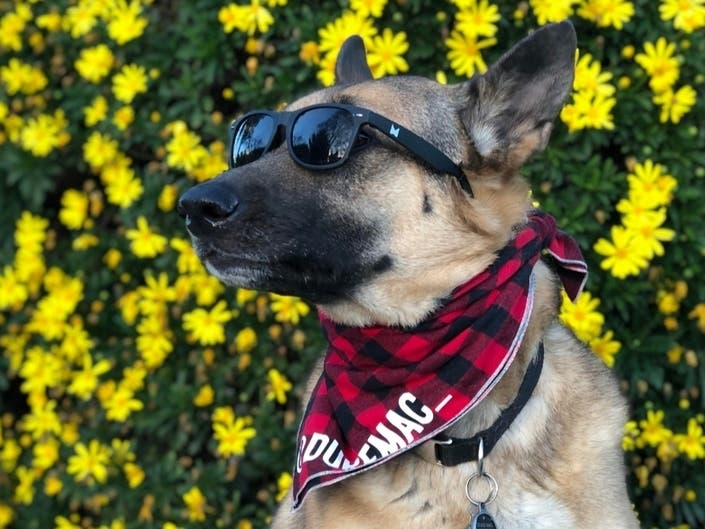Duke Dons His Shades: Photos Of The Day