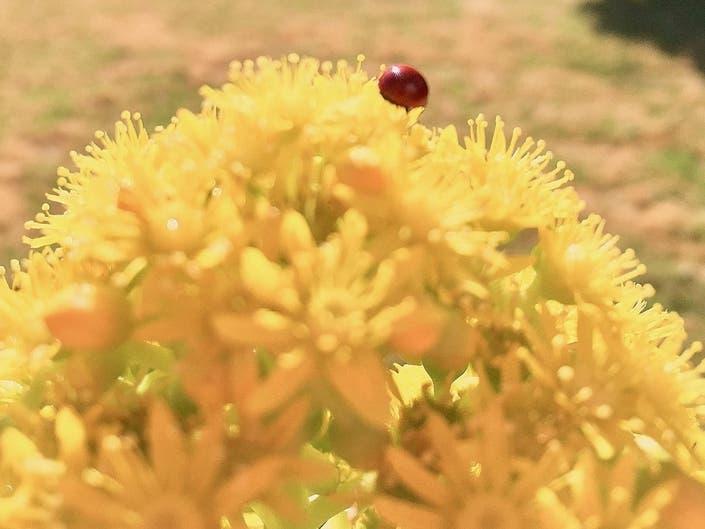 Ladybug On Succulent: Photo Of The Day