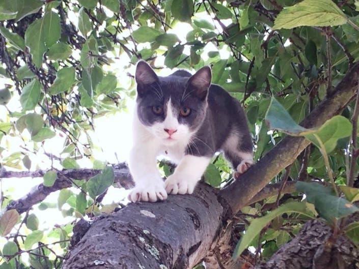 Kittens Exploring Backyard: Photos Of The Day
