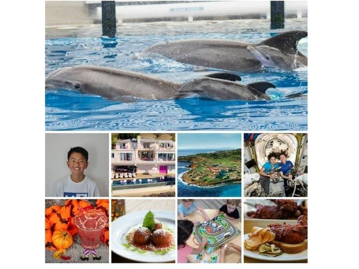 Dolphin Babies | Kid Reporter | Food News: Saturday Smiles
