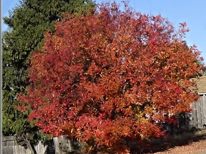 Blazing Autumn Leaves: Photo Of The Day