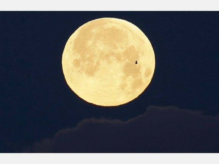 Full Pink Supermoon: How To See April's Bright Orb In Berkeley