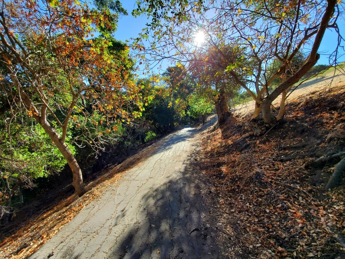 Sabercat Creek Trail: Photo Of The Day