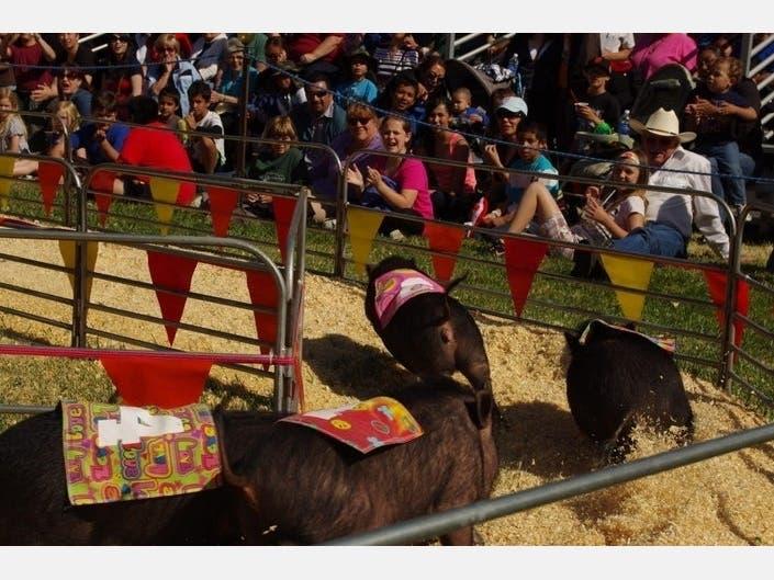 Coronavirus: San Mateo County Fair Cancelled