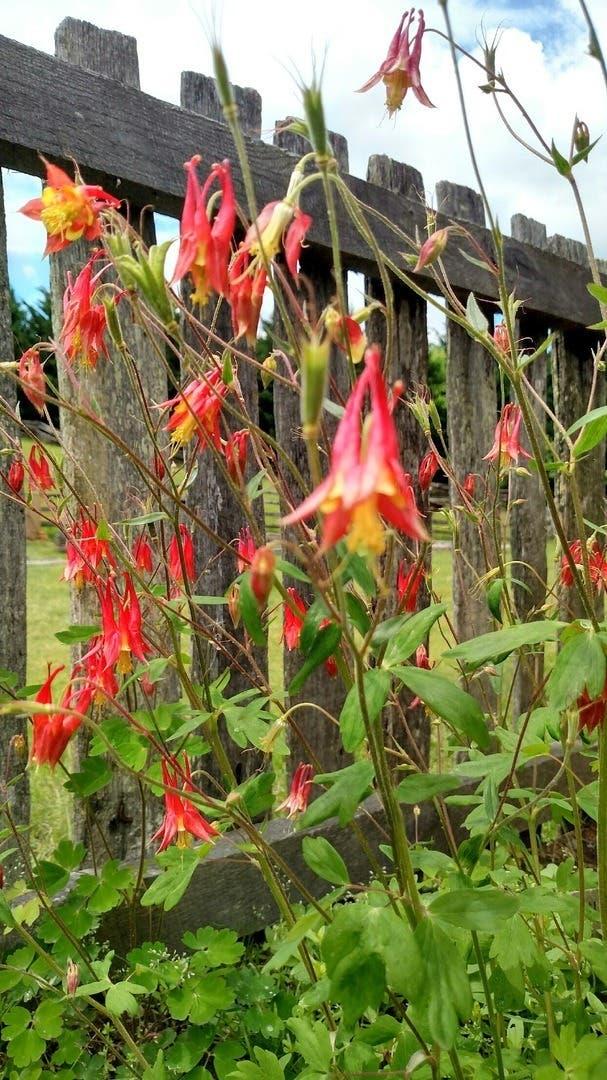 Blue Ridge Plant & Seed Swap