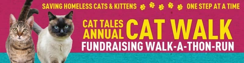 Cat Tales Annual Cat Walk