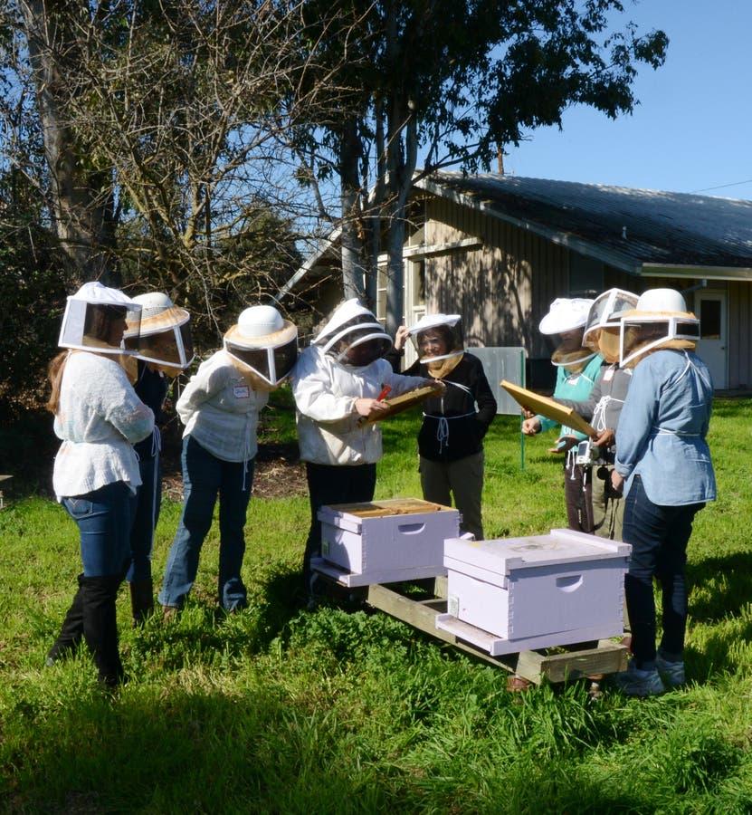 UC Davis Offers 2 Beekeeping Courses   Davis, CA Patch on