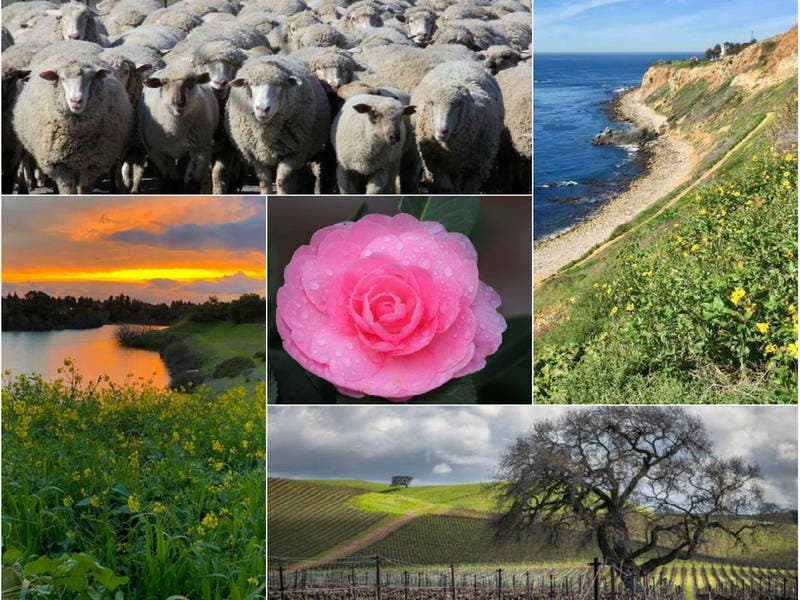 Wine Country Spring; Zuma Beach Sunset; Lone Coyote: CA In Photos