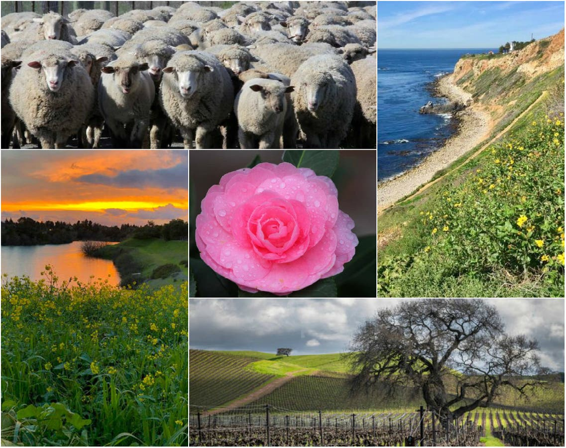 patch.com - Wine Country Spring; Zuma Beach Sunset; Lone Coyote: CA In Photos