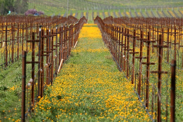 Springtime In North Bay Wine Country: Photos Of The Week