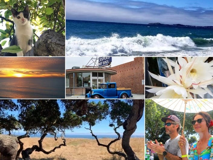 Glowing Sunsets; Showy Flowers; Dancing In Streets: CA In Photos