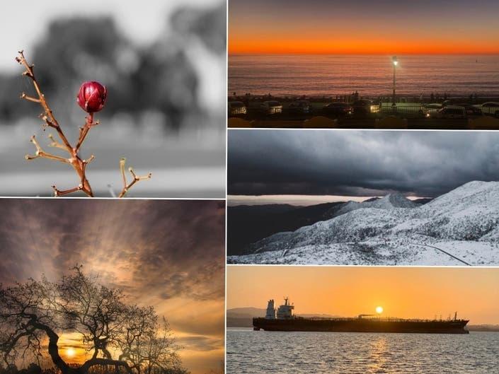 Winter Rosebud; Snowy Peak; Sailing Into The Sunset: CA In Photos