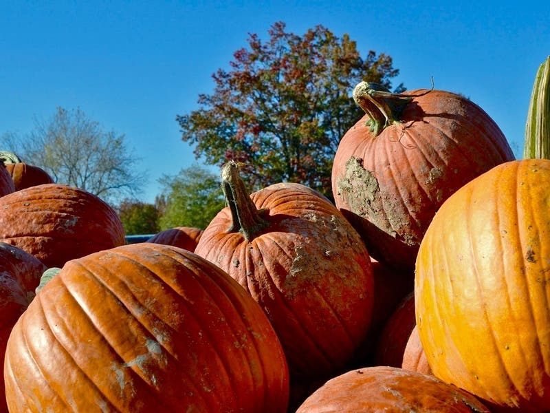 Red Flag Warning; Pumpkin Patches To Open; NorCal Jobs: Patch PM