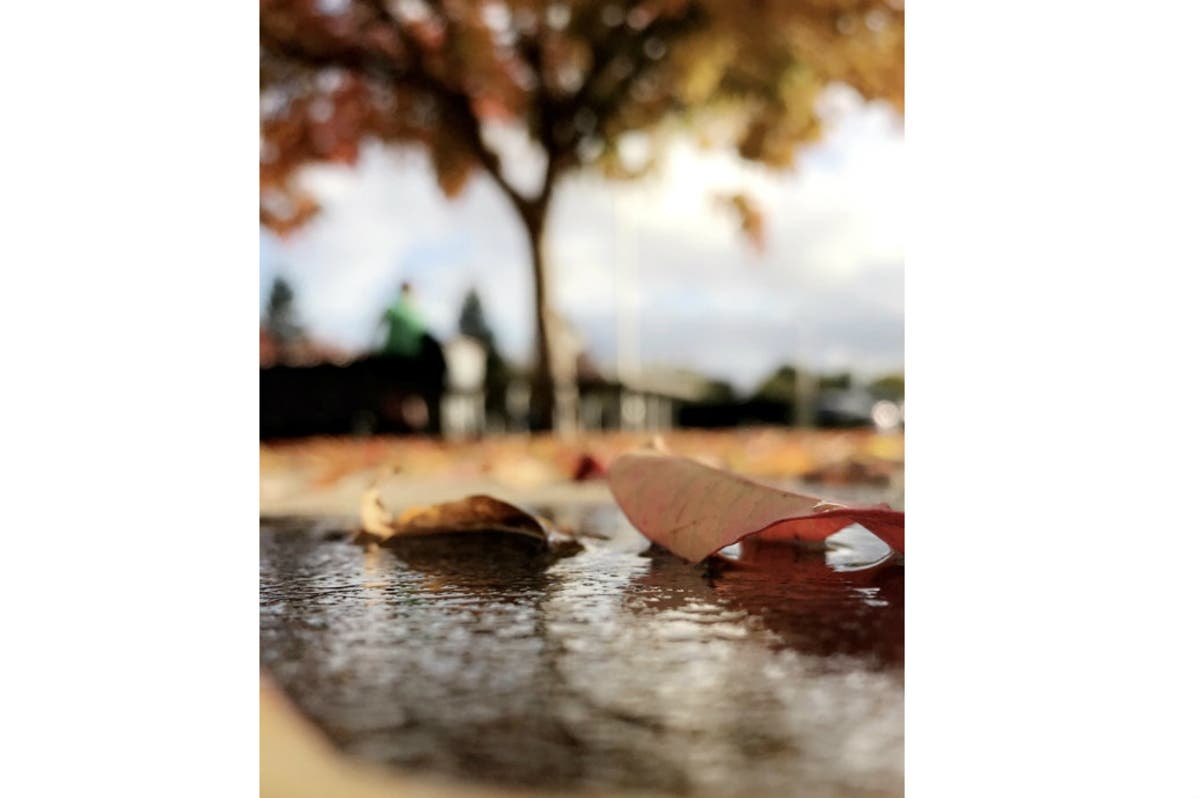 Young Photographer Has Artistic Eye: Pleasanton Photo Of