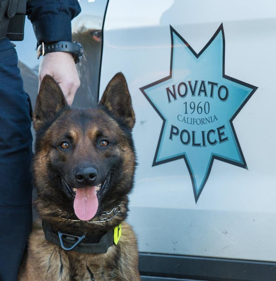 Police Bid Farewell To Retired K 9 Officer Lex In Novato Novato Ca Patch