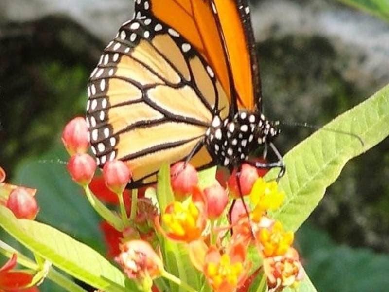 Butterfly Jungle; Holi Fest; Airport Art Walk: SoCal Weekend