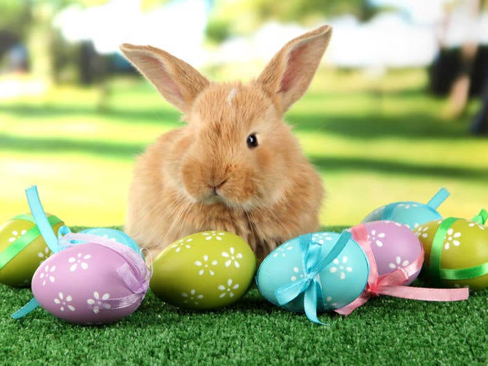 Easter Egg Hunts & Bunny Brunches: San Diego-Area Guide 2019