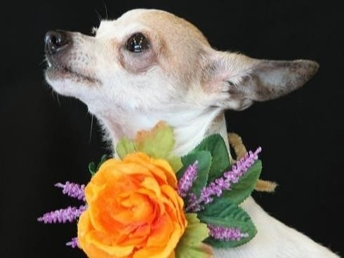 Lets Clear The Shelters: Violet Needs A Home - Maybe Yours?