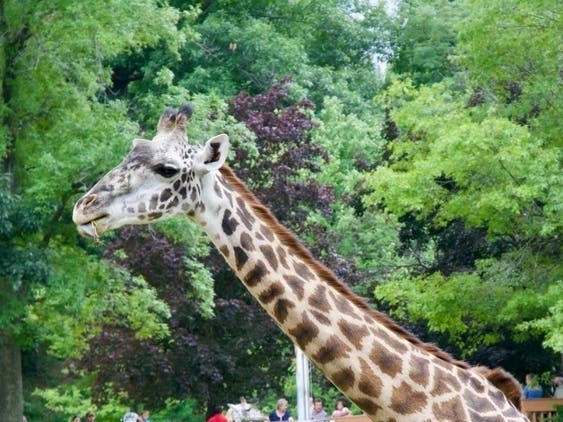 Free Child's Admission With Paid Adult: Living Zoo, Palm Desert