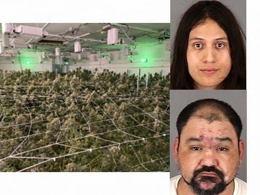 Illegal Marijuana Grow Raided, 2 Arrests In Wildomar