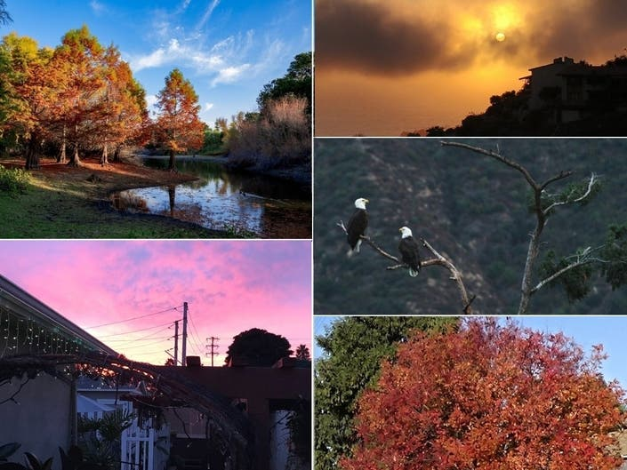 Eagle Glory; Sorbet Skies; Fall Colors: CA In Photos