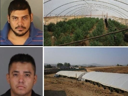 Duo Busted For Marijuana Grow After RivCo Warrants: Deputies