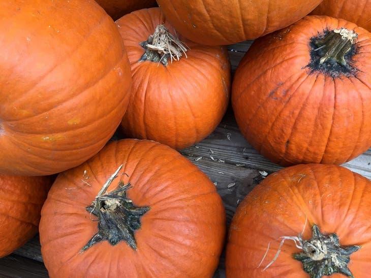Speer Family Farms Pumpkin Patch Fun 2020: Oakland