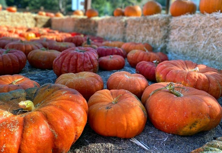 OPENING Moore's Pumpkin Patches 2020: Livermore & San Ramon