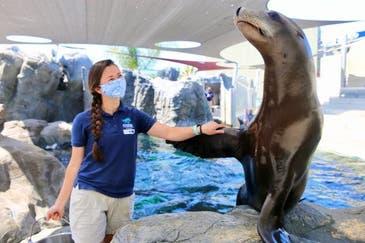 Virtual Seal-Sea Lion Encounter 2021: Pacific Aquarium Long Beach
