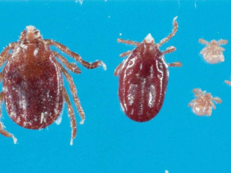 Statewide Warning Issued In CT For Rare Tick