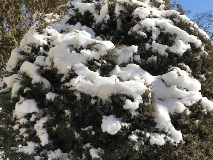 Flipboard: Hour-By-Hour Forecast Of Snow Today, Thursday: CT