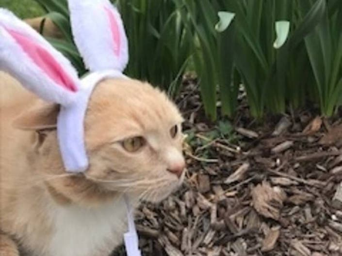 Pet Easter Toxins To Be Aware Of: Shoreline Animal Hospital