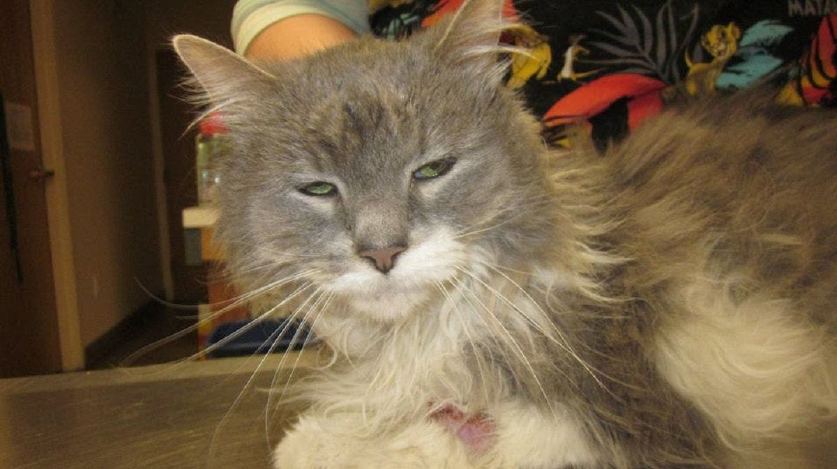 Cat With Serious Health Issues Left At Rescue Owner